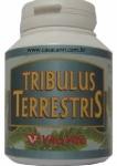 Tribulus Terrestris Vita-Vita com 50 cápsulas