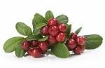 Fruta Desidratada Cranberry Pacote 200g