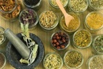 ervas medicinais que auxiliam no combate ao câncer